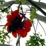 """valencia flower"" by RHEdesigns"
