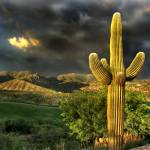 """Stormy Saguaro"" by DoloresRootPhoto"