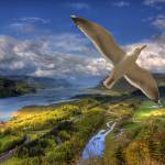 """0055 Columbia River Gorge with Bird"" by vincentlouis"