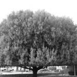 """Tree"" by VictorsPhotos"