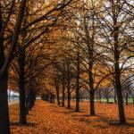 """Autumn in Grant Park"" by rhythmandcode"