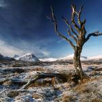 """Dead Tree 1"" by peter"
