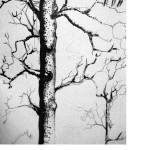 """Trees"" by efarrell1811"