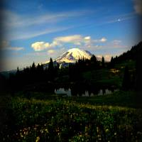 Mount Rainier Art Prints & Posters by Gina Catarra