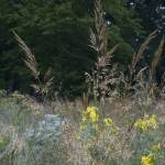 """""""grasses and wildflowers"""" by fjsjr"""