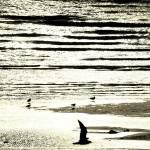 """""""SeagullSunsetBeach"""" by sillyjohno"""