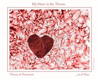 My heart in the thorns -Text