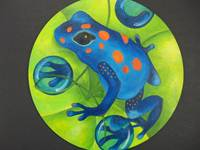 Blue and Orange Dart Frog