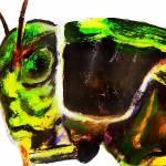 """grasshopper"" by truck"