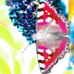 """""""Psychedelic Butterfly"""" by SteveWalton"""