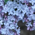 """""""Ultra Violet"""" by robvena"""