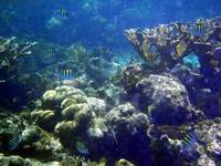 belize Coral Sea Life