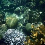 """Belize Fireworks Coral"" by SnorkelDude"