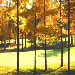 """Fall Golf"" by AudieDunham"