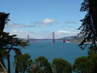Golden Gate Through Trees