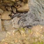 """Eels"" by caradipierro"
