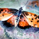 """Orange butterfly"" by randreeva"