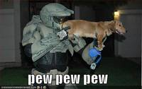 funny-pictures-halo-dog-pew