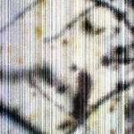 """aspenBark_5"" by vanjames"