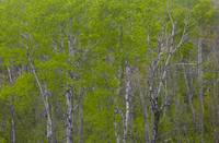 Spring Forest Detail