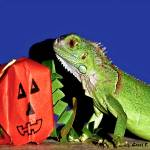 """""""Close Encounters with a Green Iguana"""" by PhotographsByCarolFAustin"""