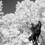 """Central Park statue"" by eran"