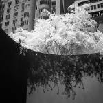 """The Moma in infra red"" by eran"