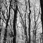 """Trees"" by eran"