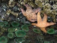 Starfish Exposed