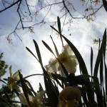 """""""Spring"""" by AppleCheeks"""
