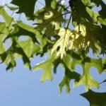 """""""Lit Leaves"""" by AppleCheeks"""