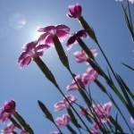 """""""Flowers"""" by AppleCheeks"""