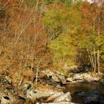"""NC_Smokies_LittleRiver2_110207"" by annmerritt"