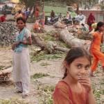 """""""Ruthless tree chopping"""" by gitaviswanath"""