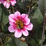 """""""Bee Mine"""" by AppleCheeks"""