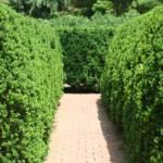 """""""The Maze at Missouri Botanical Garden"""" by hdurham0490"""