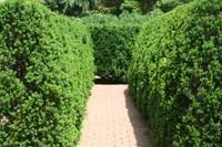 The Maze at Missouri Botanical Garden
