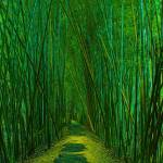 """Bamboo Forest Walk"" by geoffdavis"
