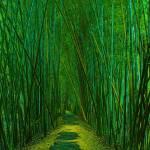 """Bamboo Forest Walk"" by geoffdavis"