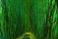 Bamboo Forest Walk