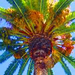 """looking up at Palm Tree"" by AmyVangsgard"