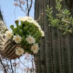 """""""cactusarm"""" by ElizabethRose"""