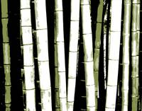 Enchanted Bamboo Green