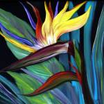 """Bird of Paradise_1_1"" by GwenRose"