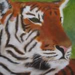 """""""Tiger"""" by sgodau"""