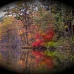 """Bougton Park, Autumn"" by ChuckDilmore"
