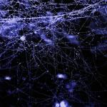"""Web Constellation"" by Angel1978"