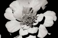 Black & White Flower