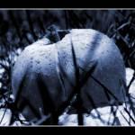 """Fallen"" by adambyron"