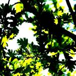"""branches high contrast 2"" by Amy_Abe"